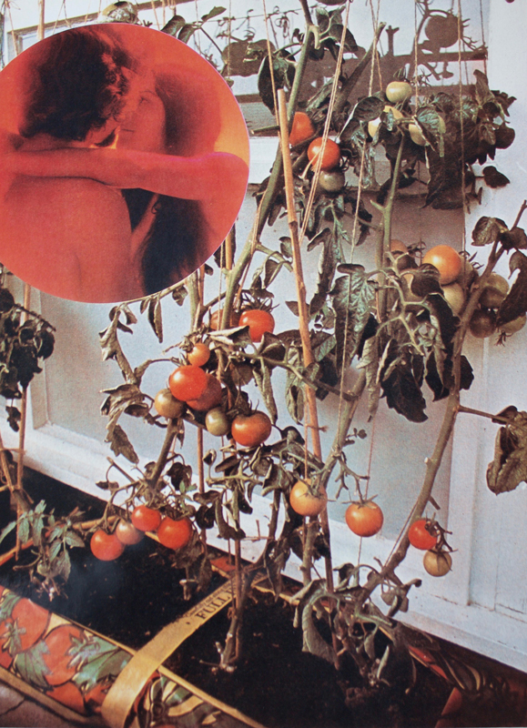 Wade Guyton, The Tomato Lovers