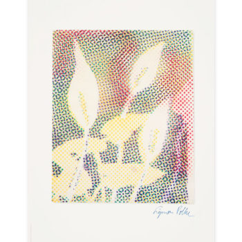 Sigmar Polke, Calla, Offset print, Limited edition prints