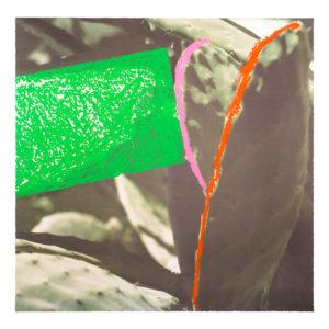 John Baldessari, Cactus