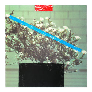 John Baldessari, Flower