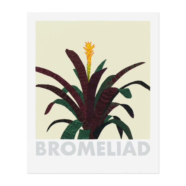 Jonas Wood, Bromeliad
